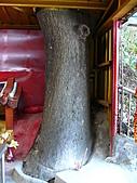 桃園龜山楓樹村百年楓香-楓樹路下土地公廟 2010/08/20:P1090215.JPG