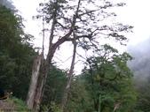 桃園上巴陵拉拉山 (達觀山) 2009/11/26 :P1050543.JPG