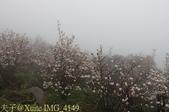 淡水楓樹湖古道木蘭花辛夷 20150225 :IMG_4149.jpg