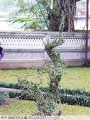 越南河內文廟 2012/01/21:P1040662.jpg
