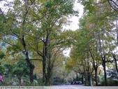 石門水庫溪洲公園 楓紅+落羽松 2011/12/28 :P1030298.jpg