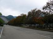 石門水庫楓葉紅了 2011/11/28:P1030454.jpg