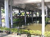2011/04/24 花博倒數第二天, 最後的一個週日, 天氣晴, 人人山人海:P1020656.JPG