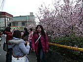淡水無極天元宮, 櫻花開了!  2011/03/08 17:00 天氣: 陰:P1010408.JPG