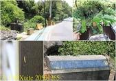 陽明山硫磺谷 2018/05/17:20501265.jpg