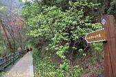 谷關捎來步道 谷關七雄老四-波津加山步道 暖身路段 20150221:IMG_3550.jpg