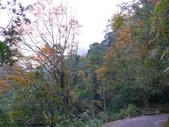 桃園上巴陵拉拉山 (達觀山) 2009/11/26 :P1050528.JPG