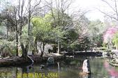 2021年 武陵農場 山櫻花、紅粉佳人 繽紛綻放 20210214:IMG_4584.jpg