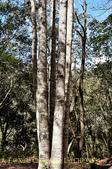 軍艦岩吊橋,尖石鄉秀巒全新景點 (秀巒道路 5K處)。 20160107:CHU_1534.jpg