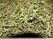 桃映紅茶製作初體驗 2010/08/29 :P1090614.JPG