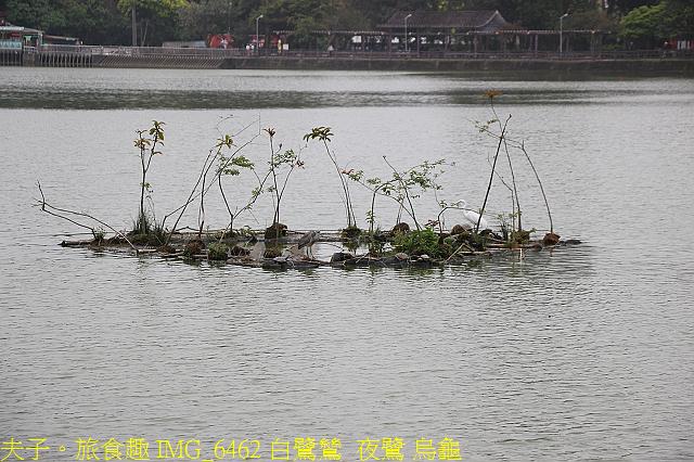 台北市內湖區碧湖公園 20210317:IMG_6462 白鷺鷥  夜鷺 烏龜.jpg