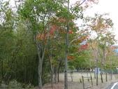 桃園上巴陵拉拉山 (達觀山) 2009/11/26 :P1050517.JPG