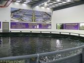 金車生物科技水產養殖研發中心─ CAS 鮮蝦養殖場 :P1140201.jpg