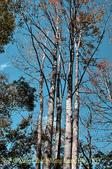 軍艦岩吊橋,尖石鄉秀巒全新景點 (秀巒道路 5K處)。 20160107:CHU_1533.jpg
