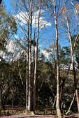 軍艦岩吊橋,尖石鄉秀巒全新景點 (秀巒道路 5K處)。 20160107:CHU_1535.jpg