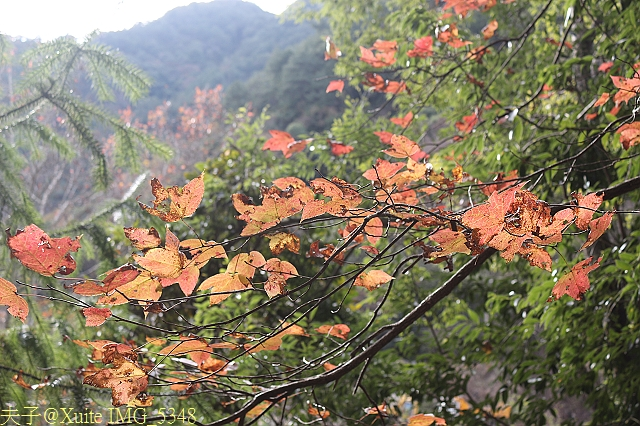 IMG_5348.jpg - 新竹尖石鄉宇老觀景台, 軍艦岩, 控溪吊橋 2012/12/26
