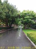 台灣大學生態池 複刻瑠公圳水源地 20200406:IMG_20200406_155730.jpg