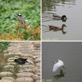 桃園市八德埤塘自然生態公園 20150501:相簿封面