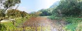 大漢溪山豬湖生態親水園區 20181107:90812 雲荷池.jpg