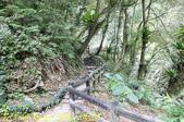 烏來 內洞森林遊樂區 內洞瀑布 20181121:IMG_9630.jpg