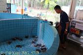 泰國攀牙海龜生態保育中心 20160207:IMG_5719.jpg