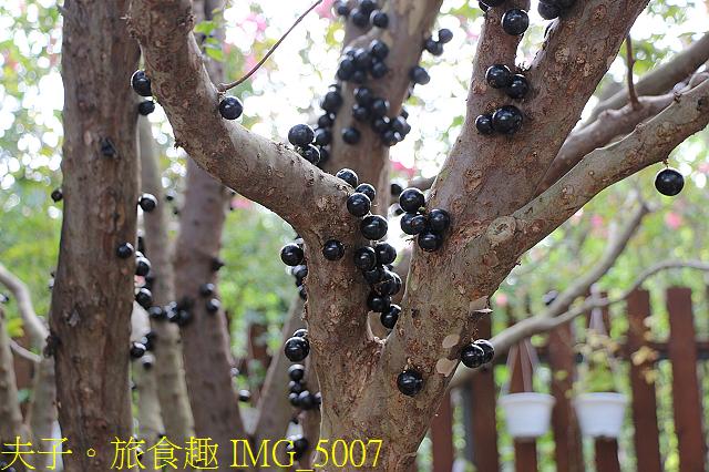 IMG_5007.jpg - 彰化田尾 庭彩園藝(小肉園) 拾捲 樹葡萄霜淇淋  20200624