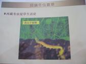 冬蟲夏草之偶見 2011/10/10 於台北三峽遠雄社區:P1090249.JPG
