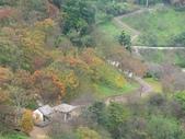 石門水庫楓葉紅了 2011/11/28:石門水庫賞楓 P1030137.jpg