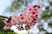 內湖大溝溪生態園區 春節走春看花海 20210131:IMG_3858-1.jpg