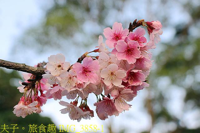 IMG_3858-1.jpg - 內湖大溝溪生態園區 春節走春看花海 20210131