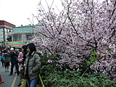 淡水無極天元宮, 櫻花開了!  2011/03/08 17:00 天氣: 陰:P1010409.JPG