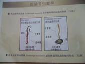 冬蟲夏草之偶見 2011/10/10 於台北三峽遠雄社區:P1090252.JPG