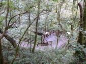 桃園上巴陵拉拉山 (達觀山) 2009/11/26 :P1050556.JPG