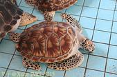 泰國攀牙海龜生態保育中心 20160207:IMG_5715.jpg