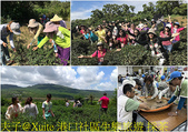 屏東滿州鄉港口社區 20180831:港口社區生態旅遊 採茶.jpg