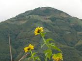 桃園上巴陵拉拉山 (達觀山) 2009/11/26 :P1050520.JPG