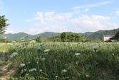 桃園大溪中新里韭菜花田 2013/09/17 :IMG_8306.jpg