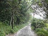 三峽懷舊步道 and 中埔生態步道-桐花與螢火蟲 2010/04/20:P1070650.JPG