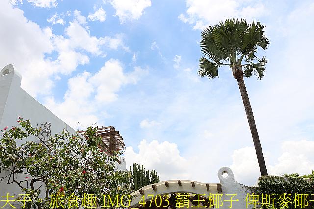 IMG_4703 霸王椰子 俾斯麥椰子.jpg - 彰化 田尾 綠海咖啡館 20200624