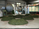 台式綠茶製作 2 - 揉捻成型 (包布球.平揉.解塊):P1100637.JPG