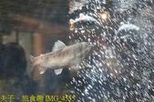 2021年 武陵農場 山櫻花、紅粉佳人 繽紛綻放 20210214:IMG_4555.jpg