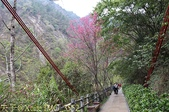 谷關捎來步道 谷關七雄老四-波津加山步道 暖身路段 20150221:IMG_3552.jpg