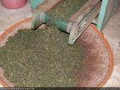 撿茶及篩茶-茶葉.茶枝.茶粉的分離:P1100695.JPG