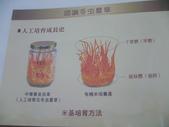 冬蟲夏草之偶見 2011/10/10 於台北三峽遠雄社區:P1090255.JPG