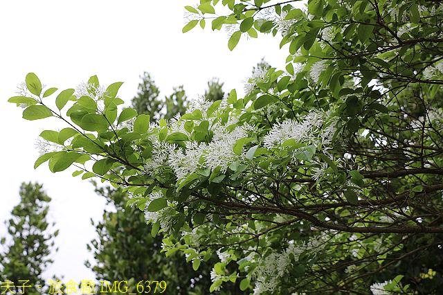 台北市內湖區碧湖公園 20210317:IMG_6379.jpg