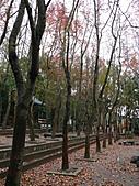 桃園市虎頭山公園整修完成+楓香紅了 2011/01/13:P1110961.JPG