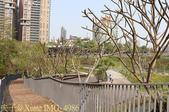 台中市秋紅谷廣場 (秋紅谷生態公園) 2015/03/15:IMG_4986.jpg