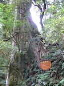 桃園上巴陵拉拉山 (達觀山) 2009/11/26 :P1050547.JPG