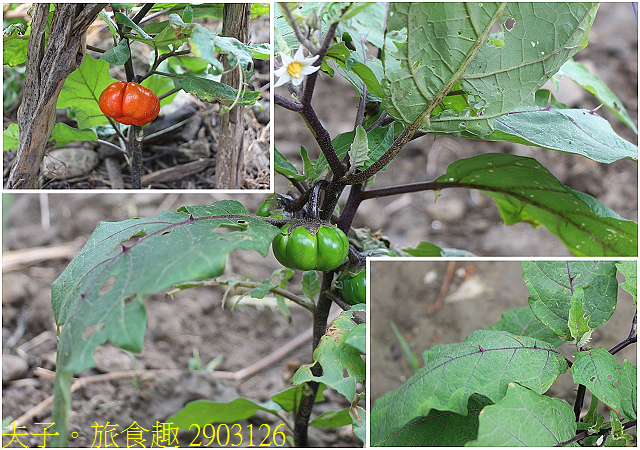 2903126.jpg - Lipahak 三峽野菜農園 20201114