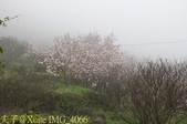 淡水楓樹湖古道木蘭花辛夷 20150225 :IMG_4066.jpg